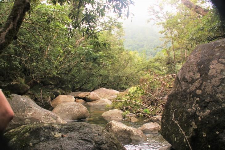 Daintree river4