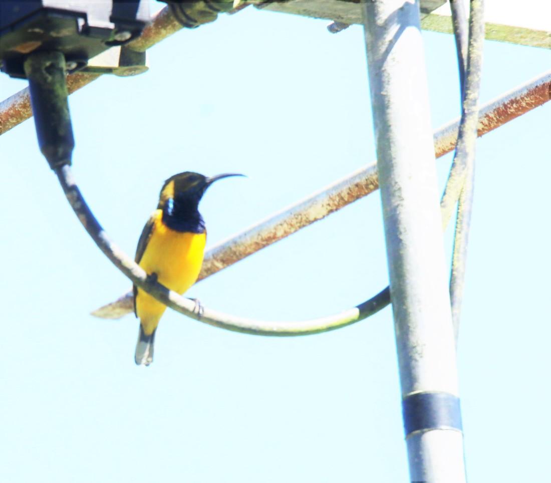 sunbird m