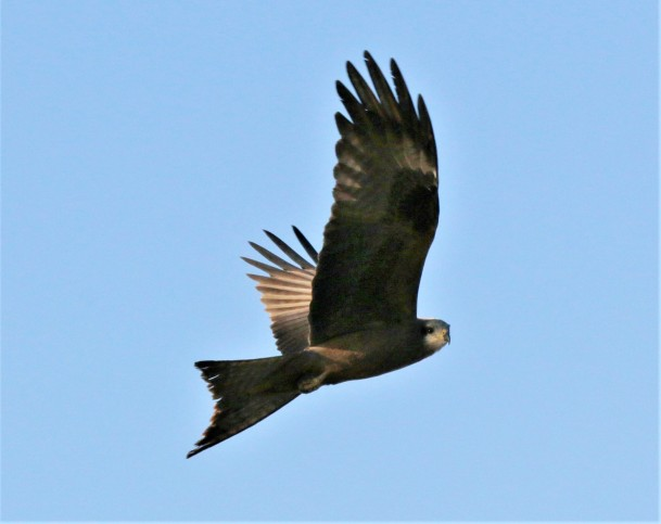 Kite, Black 2 (2)